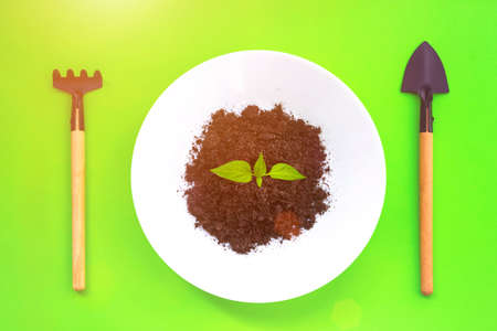 Miniature gardening tools, white plate with soil and Pumpkin seedlings on green background with sunlight, growing step concept. Top view