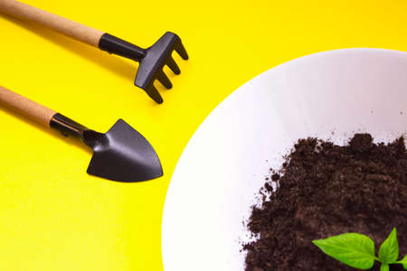 Spatula and rakes for transplantation, agriculture plant seeding, growing step concept, seedling, cultivation. agriculture, horticulture. Top view