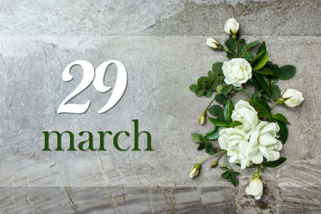 March 29th. Day 29 of month, Calendar date. Stylish roses flat lay. White roses border on pastel gray background with calendar date. Spring month, day of the year concept