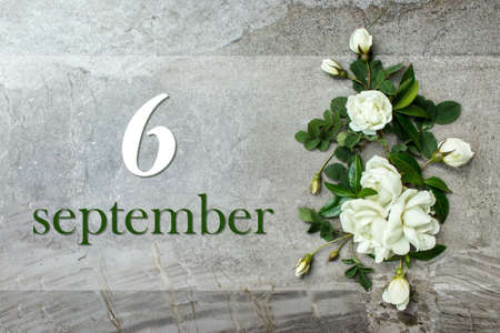 September 6th. Day 6 of month, Calendar date. Stylish roses flat lay. White roses border on pastel gray background with calendar date. Autumn month, day of the year concept