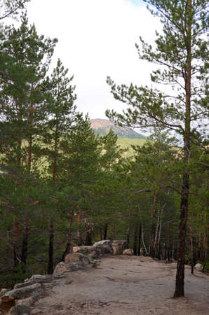 lofty: In the mountain forest, State National Natural Park Burabai, Kazakhstan Stock Photo