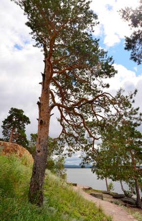 lone pine: Lone pine on the shore of Lake, State National Natural Park Burabai, Kazakhstan