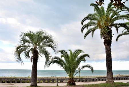 abkhazia: Waterfront views Gagra, Abkhazia