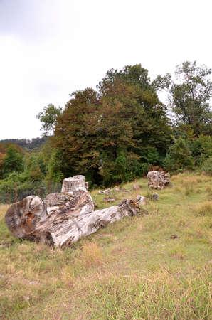 Кавказский лес. село Каштаны, Сочи, Россия