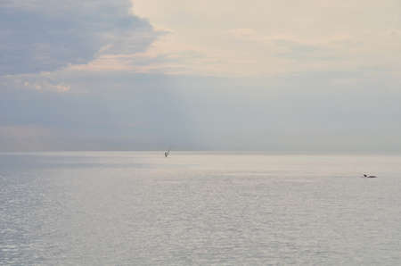 A lonely man and a lone dolphin in the sea. Sochi, Russia Фото со стока