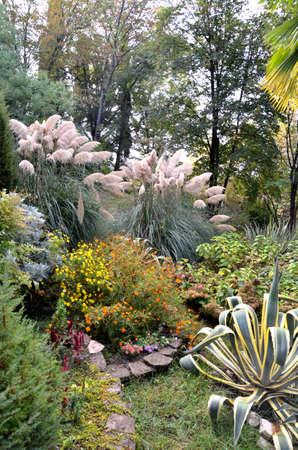Прекрасный уголок сада, Хоста. Сочи, Россия