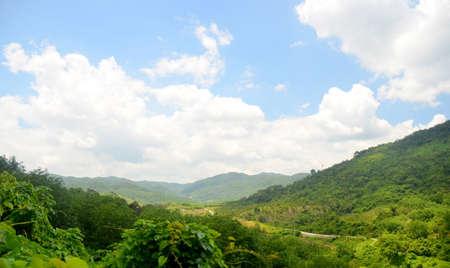 Chinese jungle, island of Hainan, May 2011 Фото со стока