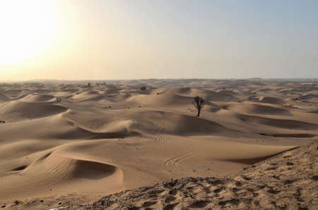 The dunes in the desert, Dubai, United Arab Emirates 스톡 콘텐츠