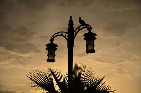 Bird on a street lamp against the morning sky. Abu Dhabi