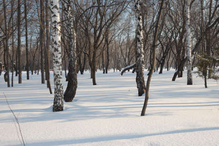 Winter Siberian city park, Omsk region Фото со стока - 109593472
