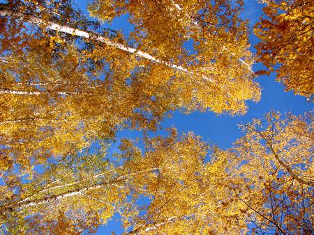 Autumn in Siberian forest, Omsk region, Russia Фото со стока - 109432244