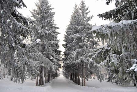 Winter Siberian forest, Omsk region Фото со стока - 109432842