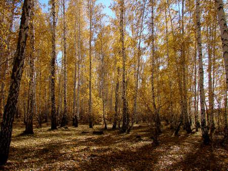 Autumn in Siberian forest, Omsk region, Russia Фото со стока - 109432848