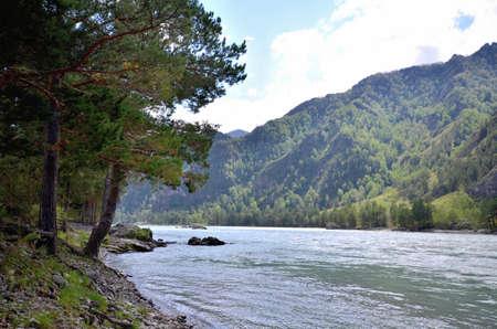 View of the Katun river. Russia, Altai Republic