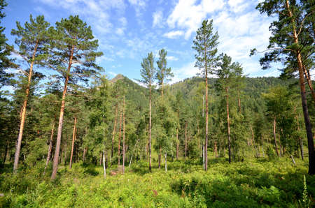 Forest and mountains, Altai Republic, Russia