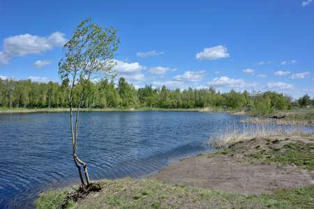 Siberian forest, Omsk region, Russia