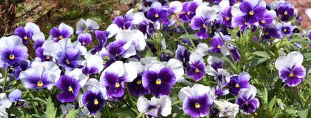 Small flowers, Omsk region, Siberia, Russia