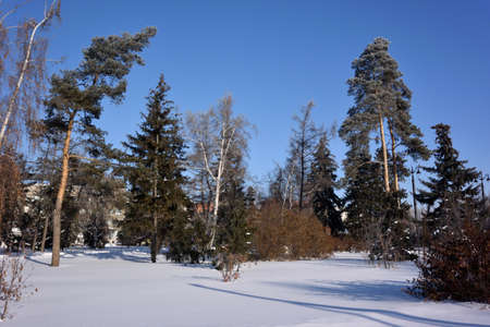 OMSK, RUSSIA - JANUARY 31, 2017: Square named Pavlik Morozov, Omsk, Siberian region, Russia Reklamní fotografie