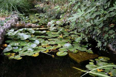 Beautiful places of the Nikitsky Botanical Garden, Yalta Crimea