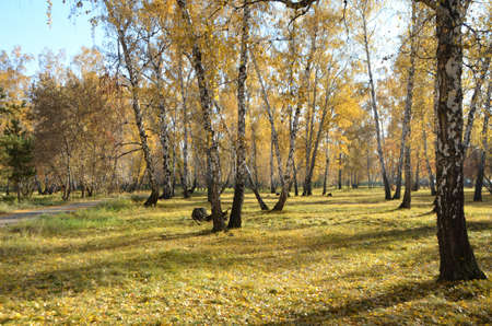 Autumn in the city park named after the 30th anniversary of the Komsomol. Omsk, Siberia, Russia