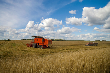Harvesting of wheat. Tractor and special harvesting equipment.