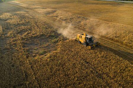 Harvester machine on the field. Field of ripe wheat. Farmers work. Banco de Imagens