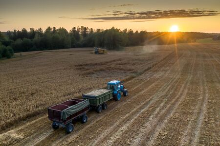 Blue tractor with trailers. Harvester. Field of ripe wheat. Farmers work. Reklamní fotografie