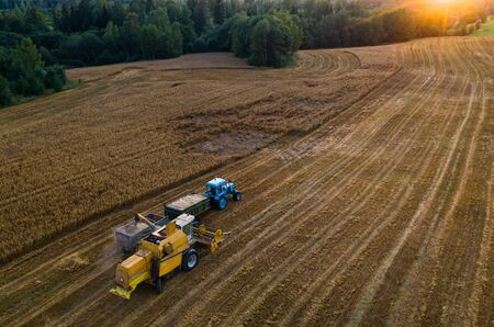 Blue tractor with trailers. Harvester. Field of ripe wheat. Farmers work. Banco de Imagens