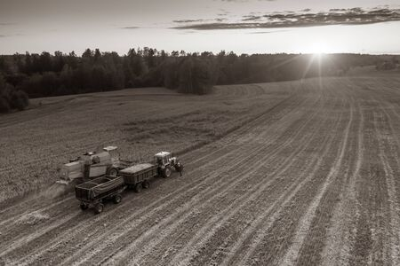 Tractor with trailers. Harvester. Field of ripe wheat. Farmers work.