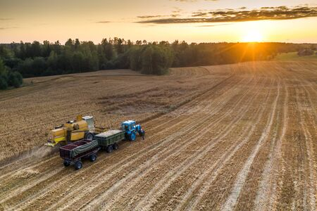 Blue tractor with trailers. Harvester. Field of ripe wheat. Farmers' work. Banco de Imagens - 129015297