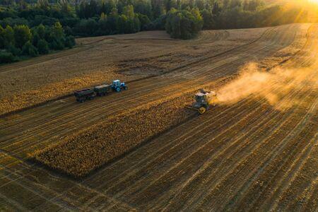 Harvester machine on the field. Blue tractor. Field of ripe wheat. Farmers work. Reklamní fotografie