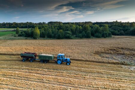 Blue tractor with trailers. Field of ripe wheat. Farmers work.
