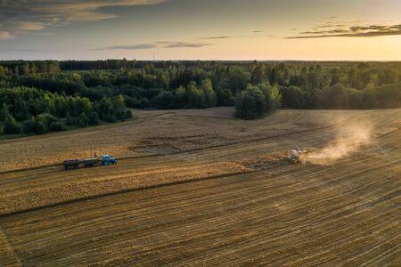Harvester machine on the field. Blue tractor. Field of ripe wheat. Farmers work. Banco de Imagens
