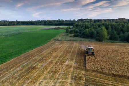 Harvester machine on the field. Green trees. Field of ripe wheat. Farmers work. Reklamní fotografie