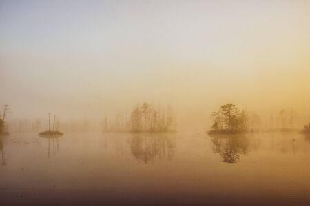 Sunlight over water. Trees. Atmospheric landscape. Fog over swamp.
