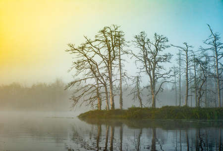 Branches trees. Atmospheric landscape. Fog over swamp. Banco de Imagens