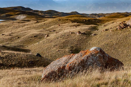 Orange moss and lichen on the stone. Kyrgyz nature. Landscape of hills at summer. Close-up.
