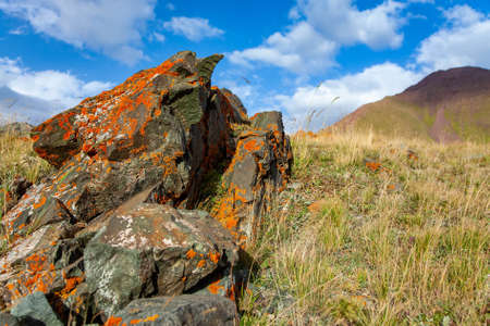 Orange and white moss and lichen on the stone. Kyrgyz nature. Landscape of mountains at summer. Close-up.