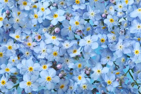 Background of many blue flowers photo