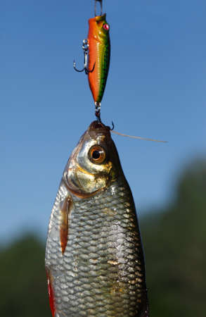 Fish rudd and popper against the dark blue sky Stock Photo
