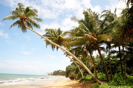 Coconut palms on Sri Lanka beach Stock Photo