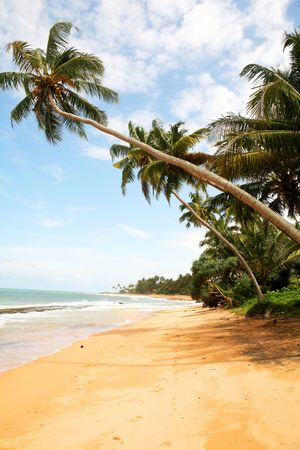 palm beach of Sri Lanka Stock Photo - 3094818
