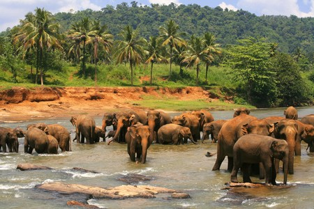 Herd of elephants taking a bath in a river Stock Photo