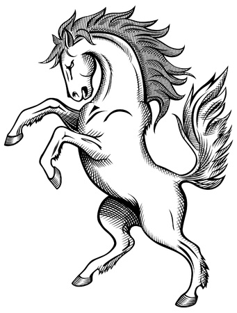 Horse drawing  Vector