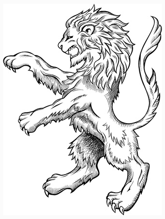 lion drawing: Selvaggio Lion Vettoriali
