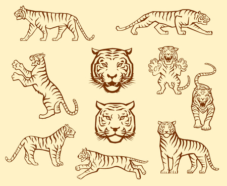 Set of Tiger Illustrations in Different Poses