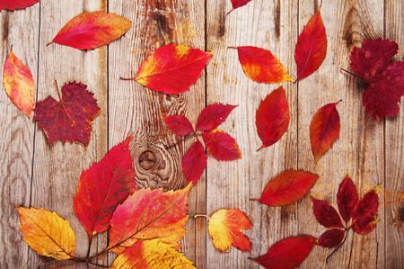 Hojas en tablas de madera Foto de archivo - 33898100