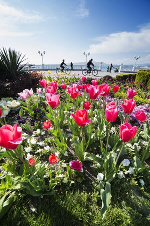 Gelendzhik embankment. Red tulips on the background of the Gelendzhik balustrade. Cyclists ride along the embankment.
