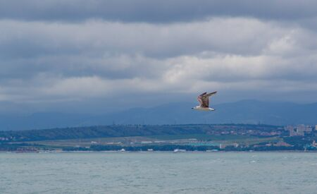 A Seagull flies against the background of dark leaden mountains. Silhouettes of mountains in the background. Small waves on the sea.