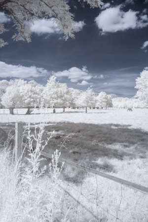 infrared: Sceaux park in infrared (Paris)